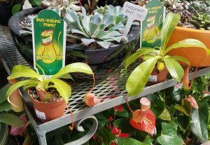 食虫植物も売っています