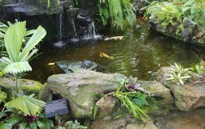 中に鯉の池がありました。