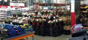 いろんなお花を売っていました!!
