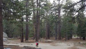 高い木もたくさんあっていい雰囲気